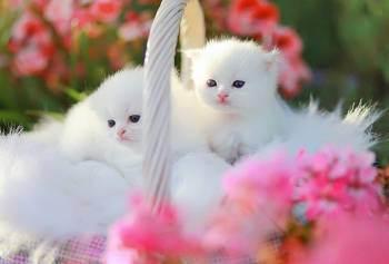 Foto Imut Kucing Animal Creature